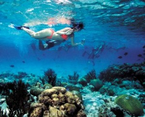 Barrier Reef Snorkel Adventure